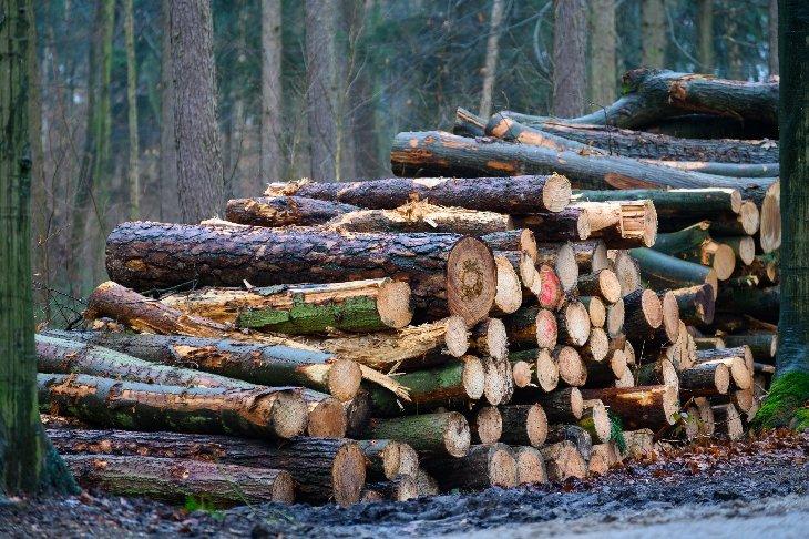 Gekapte bomen in domein De Inslag.