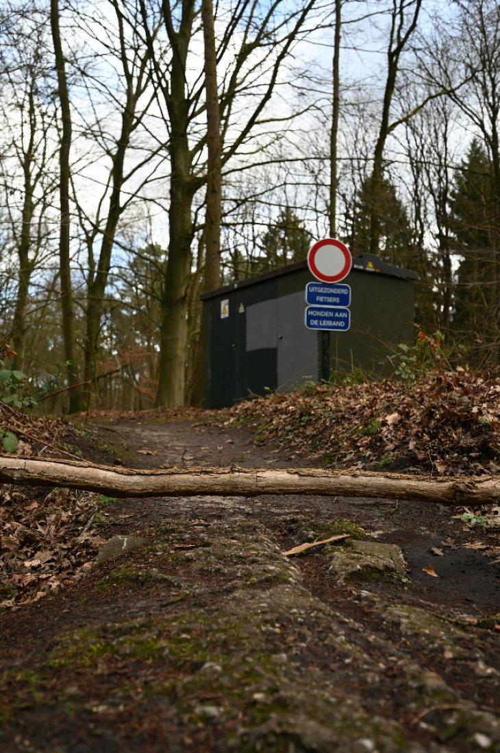 Omgevallen boom in park De Mik.