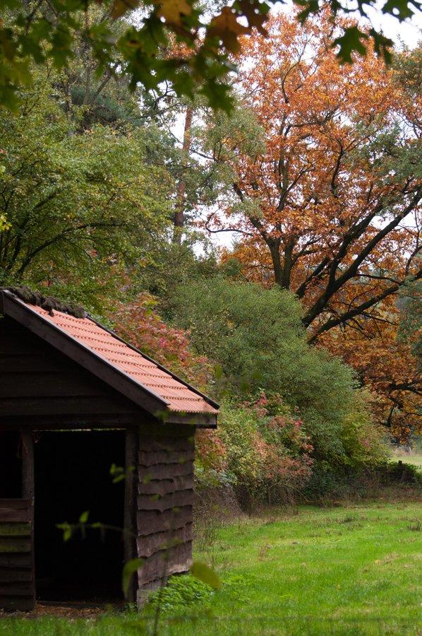 Herfst in Maria-ter-Heide 2019 (15)