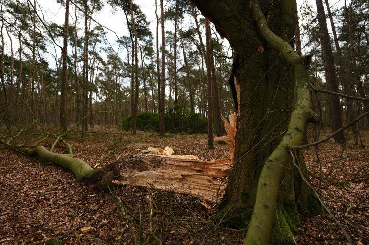 Beschadigde boom in de Miksebaan.