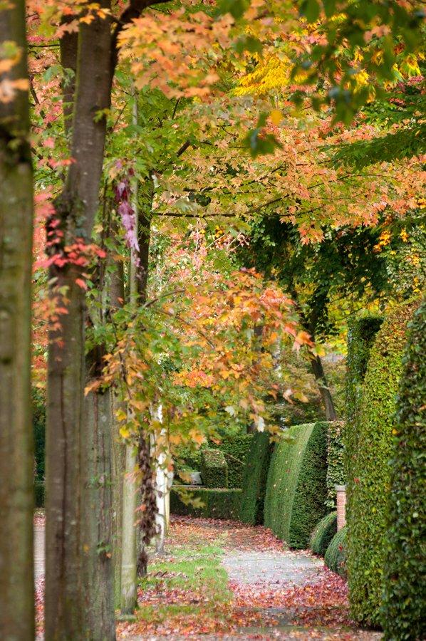 Herfst in Maria-ter-Heide 2019 (4)