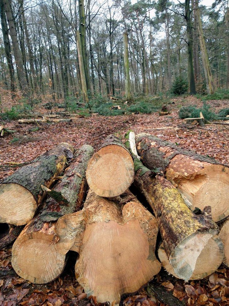 Bomenkap in domein De Inslag.