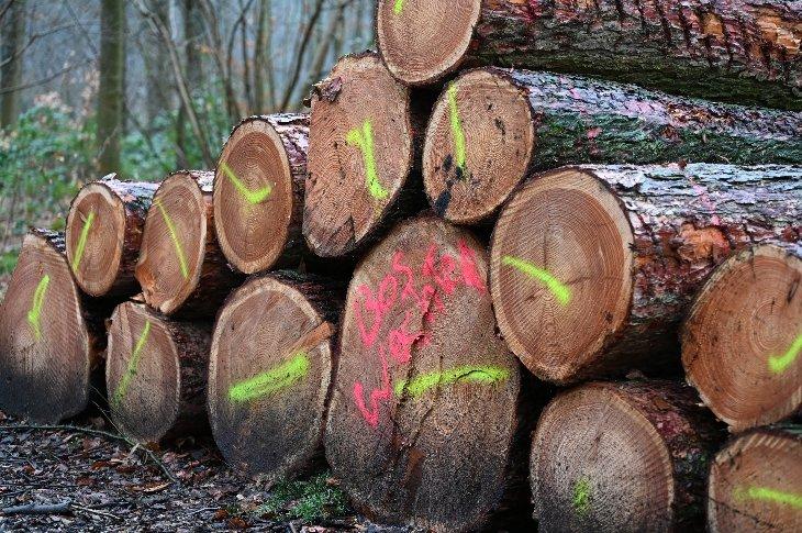 De gekapte bomen in domein De Inslag.