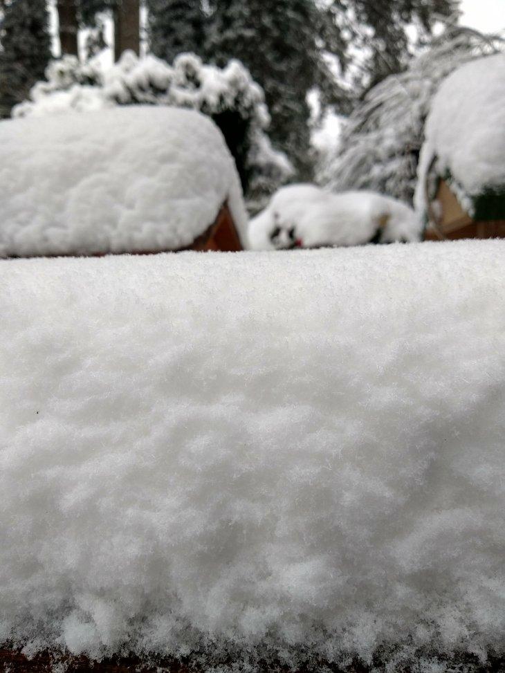 Dik laag sneeuw in Maria-ter-Heide
