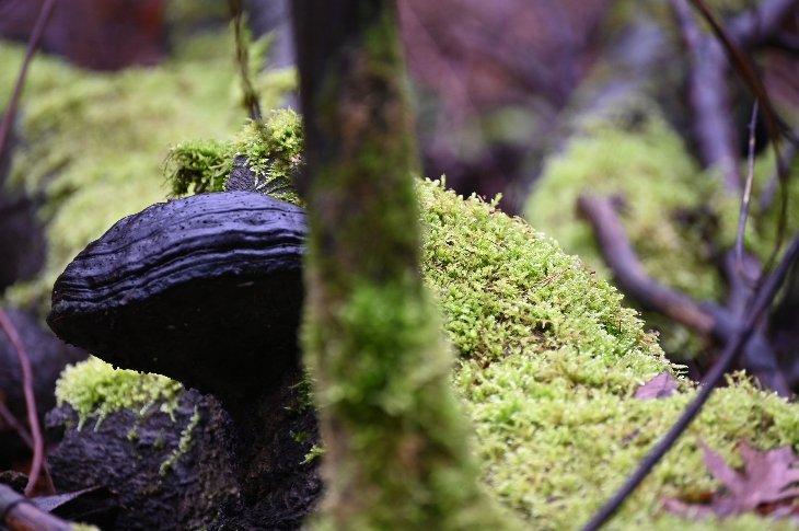 Een boomzwam op dode boomstronk.