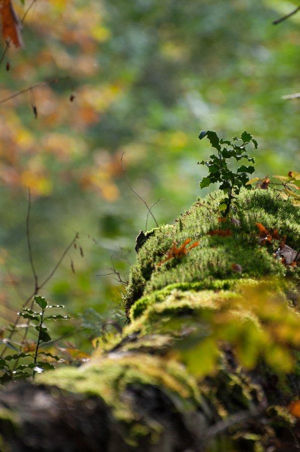 Herfst in Maria-ter-Heide 2019 (1)