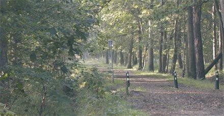Nieuw bos
