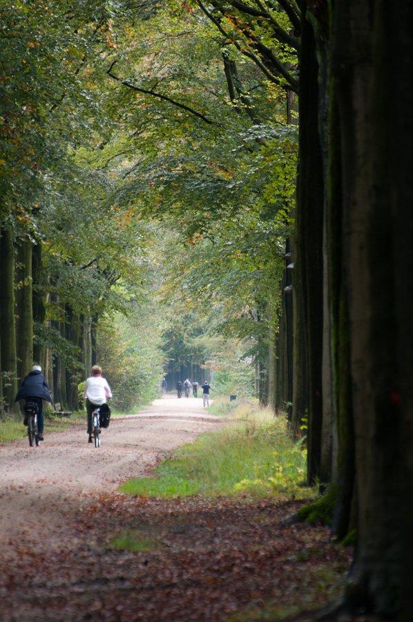 Herfst in Maria-ter-Heide 2019 (6)
