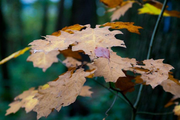 Herfst in Maria-ter-Heide 2019 (9)
