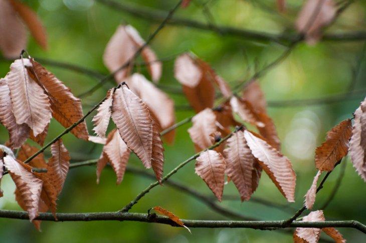 Herfst in Maria-ter-Heide 2019 (18)