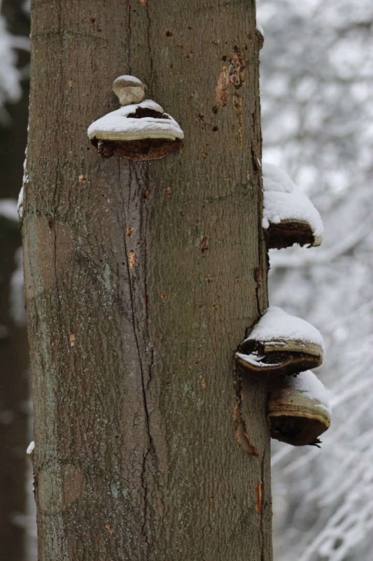 Sneeuw in Maria-ter-Heide.
