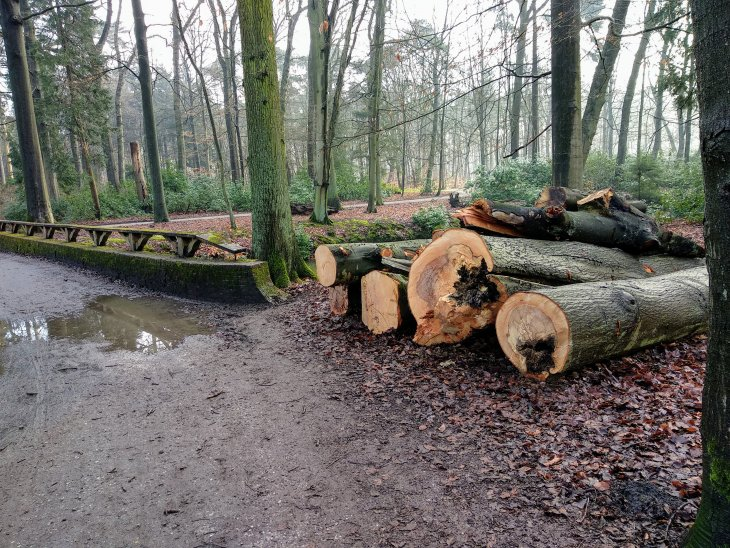 Bomenkap in park De Mik.
