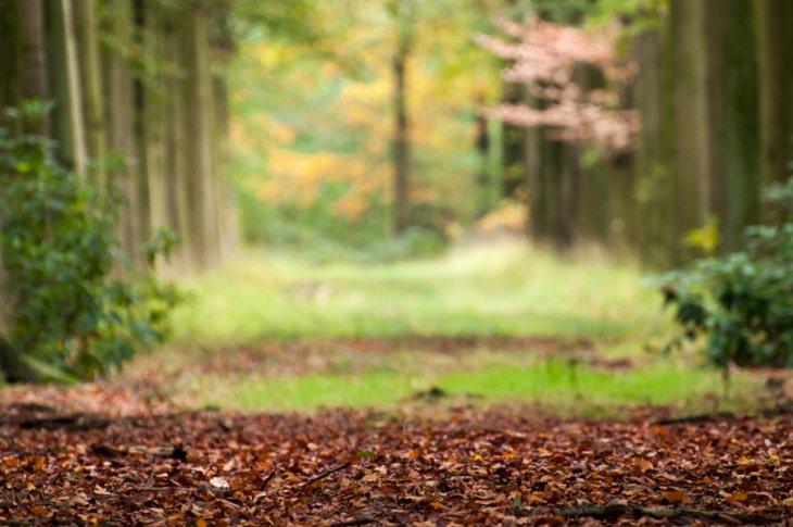 Herfst in Maria-ter-Heide 2019 (14)