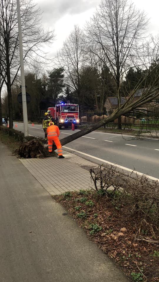 Omgewaaide boom Sint-Jobsesteenweg.