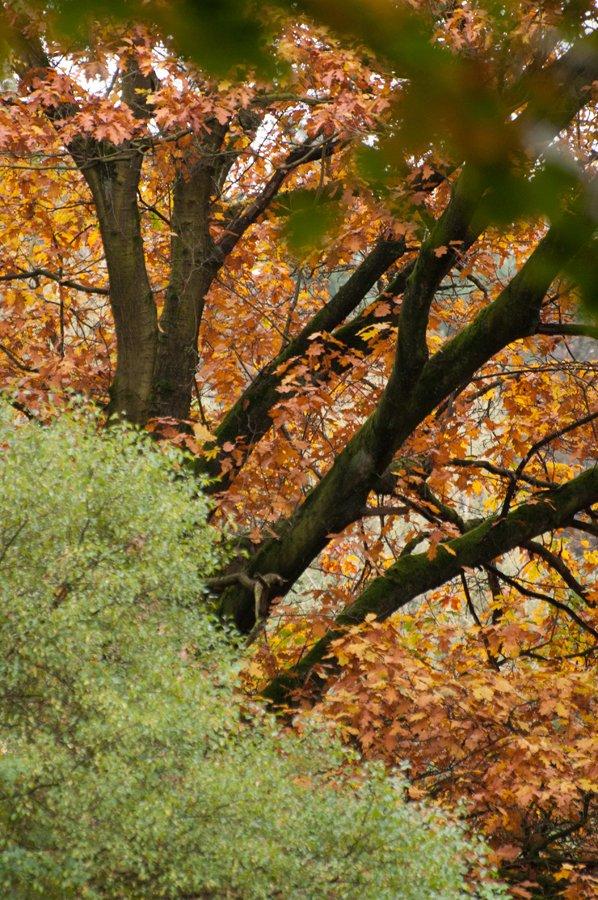 Herfst in Maria-ter-Heide 2019 (16)