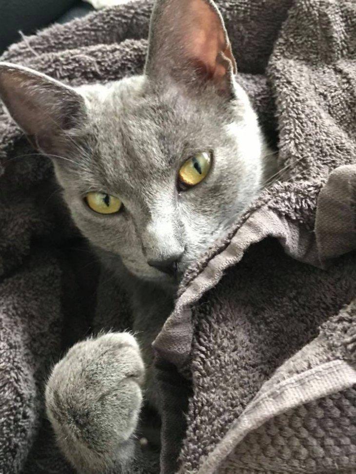 Kattin Sira (vermist)