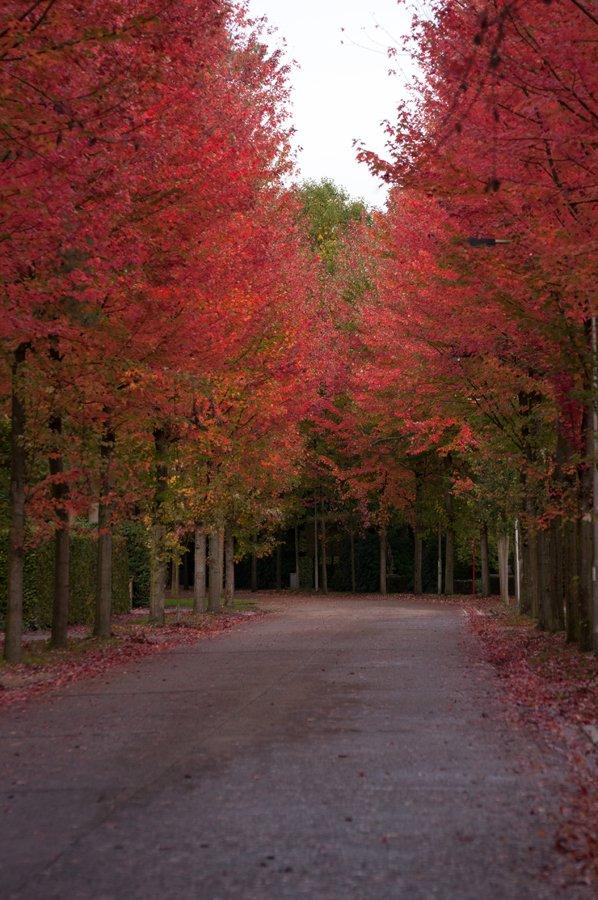Herfst in Maria-ter-Heide 2019 (5)
